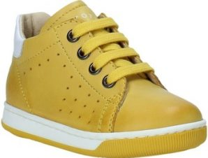 Xαμηλά Sneakers Falcotto 2013491 01